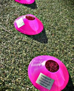 challenge-cones